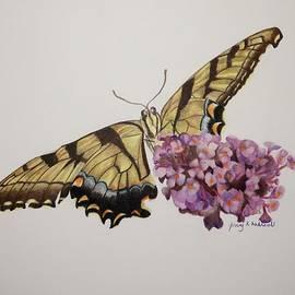 Jenny Andreoli - Butterfly in Garden