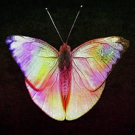 Manjot Singh Sachdeva - Butterfly In Retro