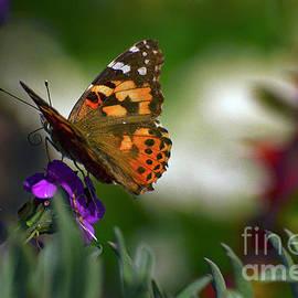 Debby Pueschel - Butterfly in Winter