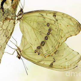 Butterfly Love Is In The Air by Sabrina L Ryan