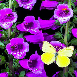 Garry Gay - Butterfly On Foxglove