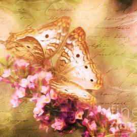 Tina LeCour - Butterfly Romance