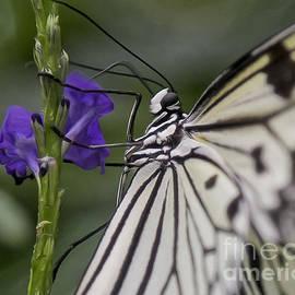 Butterfly Splendor by Sue Harper