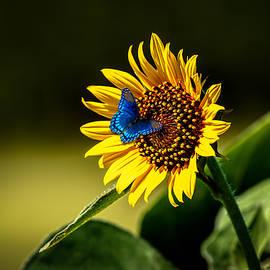 Doug Long - Butterflys-N-Flowers