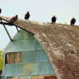 Buzzards Barn by Honey Behrens