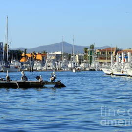 Cabo San Lucas Marina  Mexico Sea of Cortez by Charlene Cox