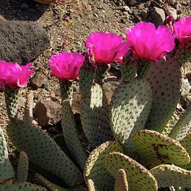 Cactus Chorus Line by Jean Noren
