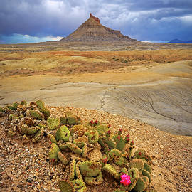 Johnny Adolphson - Cactus flower in the Badlands.