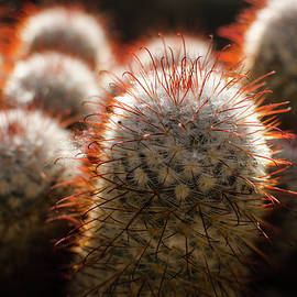 Cactus In The Conservatory by Miguel Winterpacht