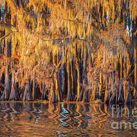 Caddo Abstract Trees - Inge Johnsson
