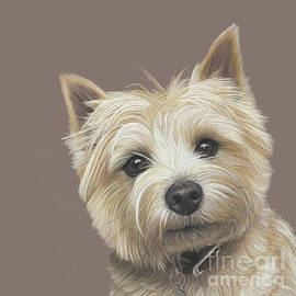Donna Mulley - Cairn Terrier - Dave