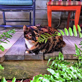 Calico Cat Key West Porch