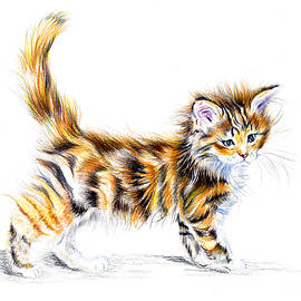 Calico Kitten by Debra Hall