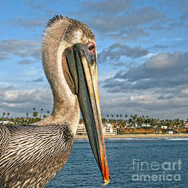 Gabriele Pomykaj - California Brown Pelican Portrait