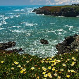 California Coast by Harry Spitz
