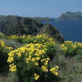 California Island Sunshine by Don Kreuter