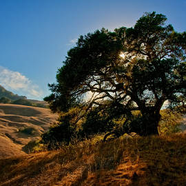 Flying Z Photography By Zayne Diamond - California Oak, Light Rays