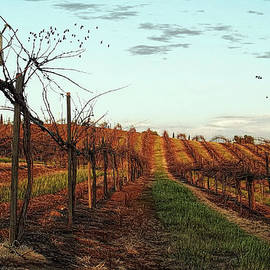 California Vineyard In Winter by Glenn McCarthy Art and Photography