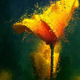James Shepherd - Californian poppy