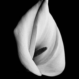 Venetia Featherstone-Witty - Calla Challenge in Black and White