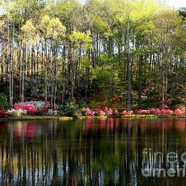 Callaway Gardens, Pine Mountain Azaleas by the lake by Charlene Cox