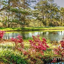 Callaway Gardens Springtime azaleas by Charlene Cox