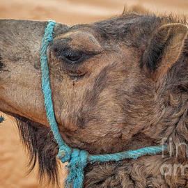 Patricia Hofmeester - Camel head