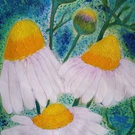 Jean Fassina - camomile flowers in my Puglia garden 2
