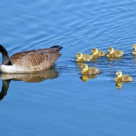 Sharon Talson - Canada Goose Family