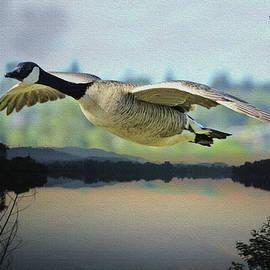 Jodi Laycock - Canada Goose