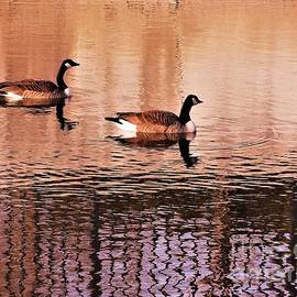 Rory Cubel - Canadian Goose Pair On Calm Water             Spring             Indiana