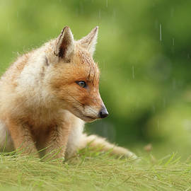 Can't Stand the Rain - Little fox kit by Roeselien Raimond