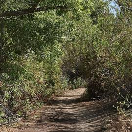 Linda Brody - Canyon Path I