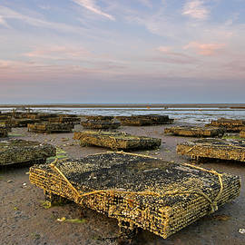 Juergen Roth - Cape Cod Oyster Cases and Beds