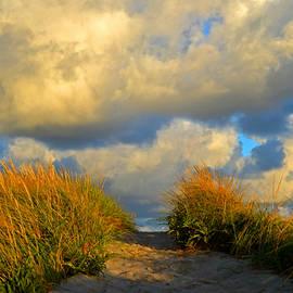 Dianne Cowen - Cape Cod Sand Dunes