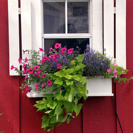 Jean Hall - Cape Cod Window Box