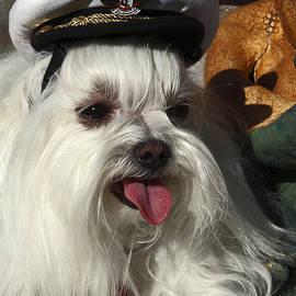 Sally Weigand - Captain Maltese Dog