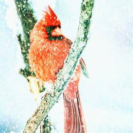 Captivating Cardinal by Tina LeCour