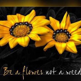 Card Be A Flower by Wolfgang Stocker