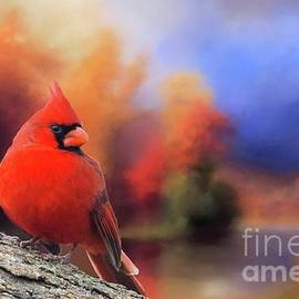 Janette Boyd - Cardinal in Autumn