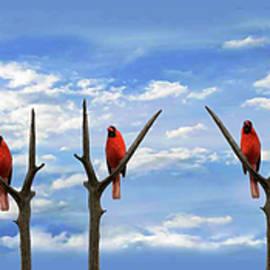 Cardinal Sins - Pano by Brian Wallace