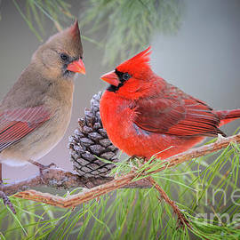 Bonnie Barry - Cardinals in Pine
