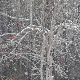 Sue McGlothlin - Cardinals in tree