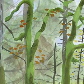 Alexandra Schaefers - Cardwell Hill Forest