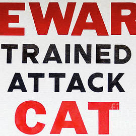 Carefully trained for attack cat