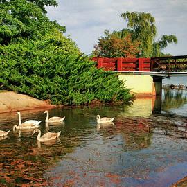 Geraldine Scull - Sayreville NJ bridge and swan family