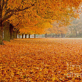 March of the Maples by Butch Lombardi