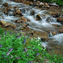 Cascades And Wildflowers In Loveland Pass by Lynn Bauer