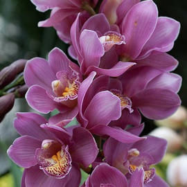 Cascading Orchids by Sherry Hallemeier