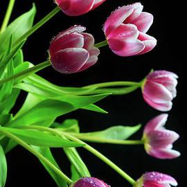 Tracy Hall - Cascading Tulips